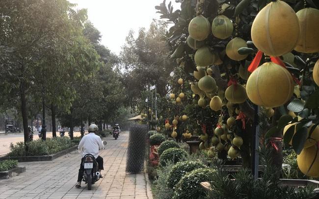 Bưởi Diễn giá trăm triệu đồng 'đổ bộ' Sài Gòn