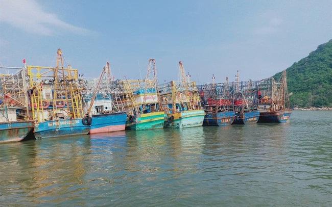 Phó Chủ tịch tỉnh Bình Định khuyến khích ngư dân kiện bảo hiểm PJICO ra tòa