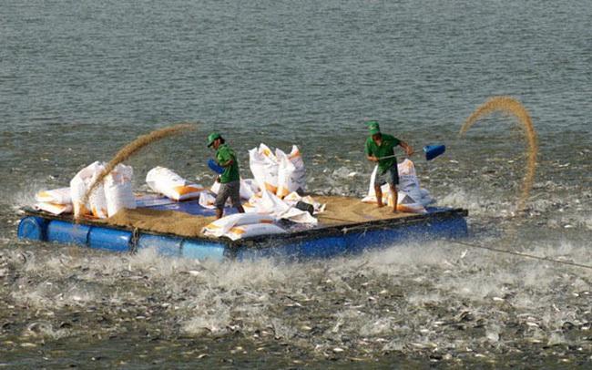 Agifish (AGF) bị hủy niêm yết bắt buộc trên HoSE sau 18 năm lên sàn
