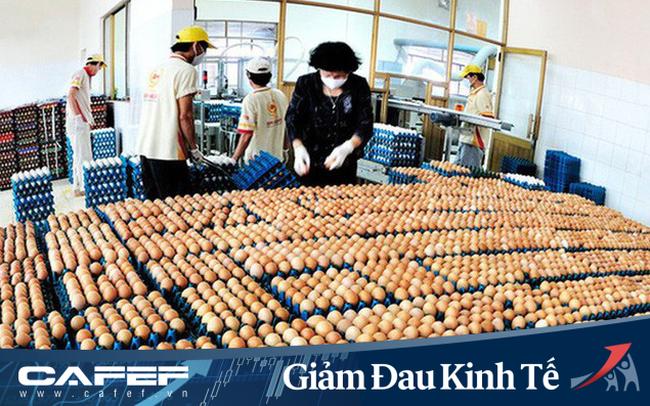 Doanh nghiệp trứng gà Ba Huân mất kênh bán hàng ở trường học, nhà hàng nhưng tăng ở siêu thị, 800 nhân viên vừa lo làm vừa lo chống dịch