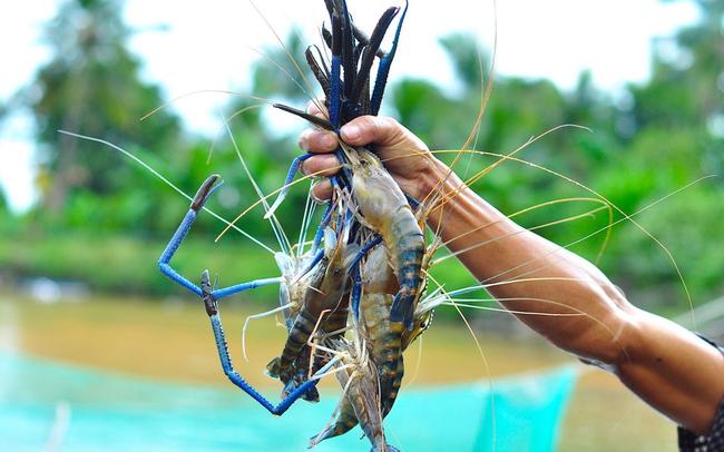 Thủy sản Thuận Phước phát hành cổ phiếu thưởng tỷ lệ 100%