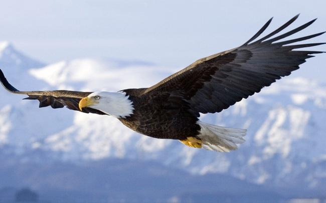 Không dám vượt qua giới hạn của bản thân, bạn mãi mãi chỉ là con gà trong hình dáng đại bàng: 3 hành động cần làm ngay theo một doanh nhân đầy tham vọng sẽ giúp bạn bứt phá!