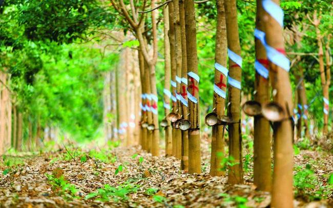 Tập đoàn Công nghiệp Cao su Việt Nam (GVR) đặt kế hoạch lãi ròng 4.029 tỷ đồng trong năm 2020