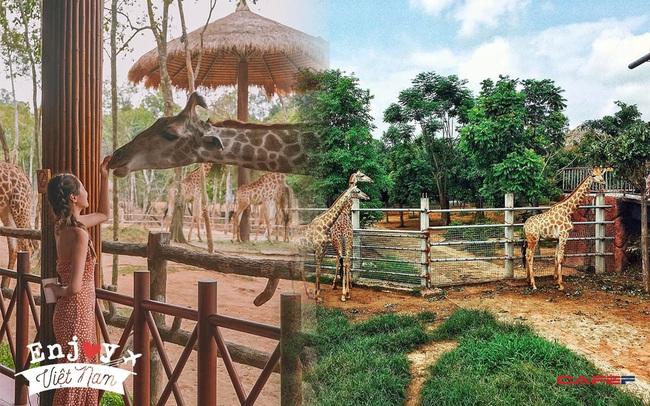 3 vườn thú safari ở Việt Nam: Tận mắt chiêm ngưỡng thế giới hoang dã với giá cực phải chăng, phù hợp với các gia đình có con nhỏ