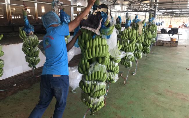 HAGL Agrico đặt kế hoạch lãi trước thuế 566 tỷ đồng năm 2020, nâng quy mô trồng chuối lên 15.000 ha