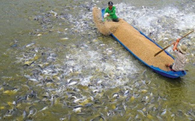 Thủy sản Cửu Long An Giang (ACL) chốt quyền trả cổ tức năm 2019 bằng cổ phiếu tỷ lệ 120%