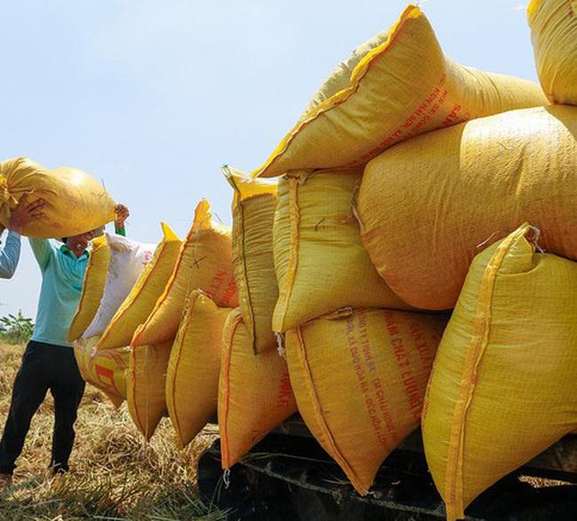 Xuất khẩu gạo bị hẫng sau thời gian 'sục sôi'