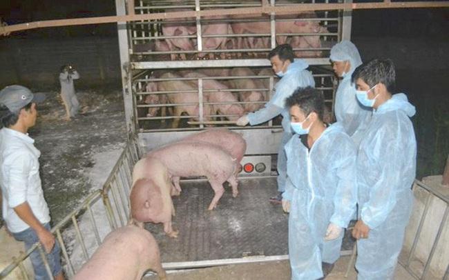 Lợn Thái Lan nhập khẩu chưa đủ để giảm giá thịt trong nước