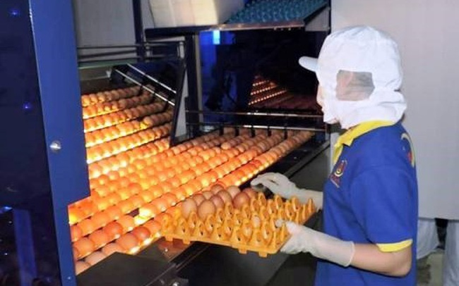 Hồng Kông dỡ bỏ lệnh cấm nhập khẩu thịt và trứng gia cầm từ Việt Nam