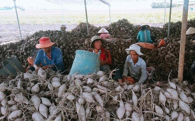 """Nông sản Việt """"mất đường"""" sang Trung Quốc vì virus corona"""