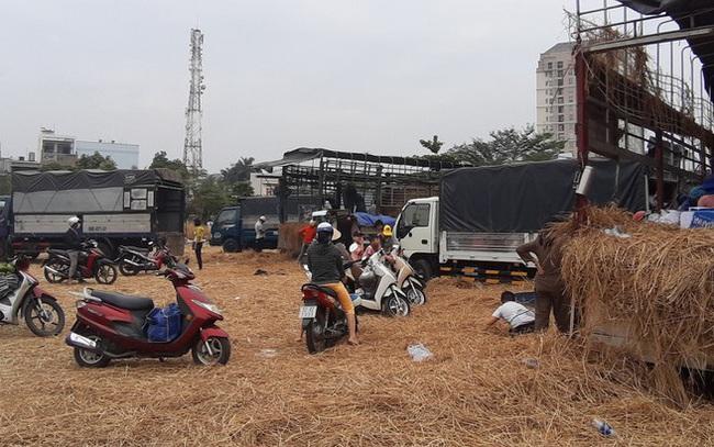 Người Sài Gòn 'giải cứu dưa' giúp nông dân Bình Định