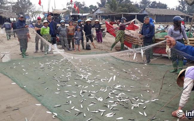 Được mùa cá trích, ngư dân xứ Thanh thu chục triệu mỗi ngày