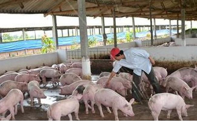 Hết quý 3, giá thịt lợn mới có thể giảm xuống 60.000 đồng/kg lợn hơi