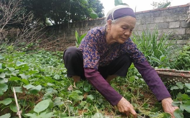 Cụ bà bán rau 79 tuổi ủng hộ tiền chống dịch COVID-19