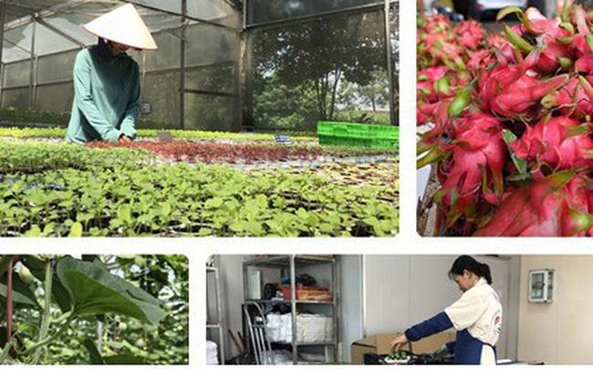 """Tìm """"lối thoát"""" cho nông sản Việt giữa tâm dịch Covid-19 vẫn là bài toán khó"""