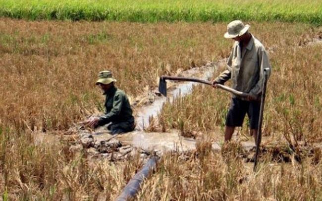 Chính phủ hỗ trợ 530 tỷ đồng cho 8 tỉnh đồng bằng sông Cửu Long