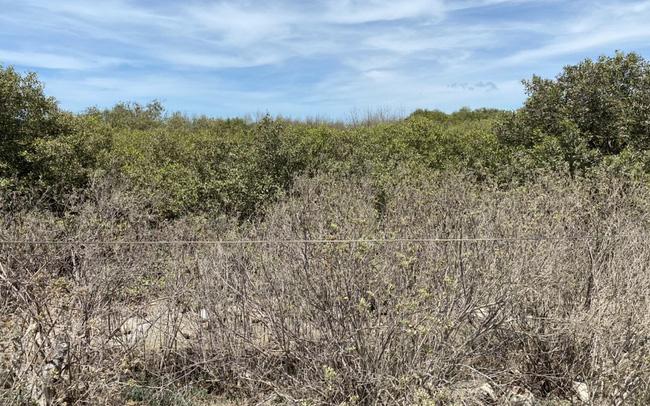 Thanh tra Chính phủ kiến nghị giải quyết bồi thường khiếu nại đất đai tại Bà Rịa- Vũng Tàu