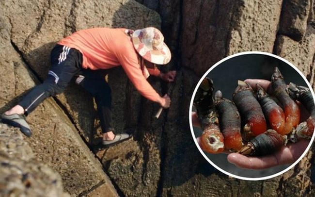 """Nghề đánh bắt """"ngón tay quỷ"""": Công việc không dành cho người yếu tim, để có được món hải sản quý giá bậc nhất phải mạo hiểm cả tính mạng"""