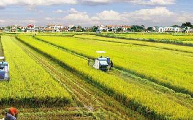 Đại biểu Quốc hội đồng tình với chủ trương miễn thuế đất nông nghiệp