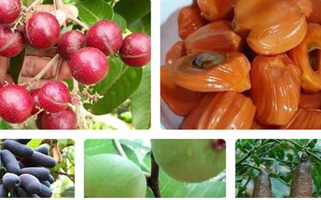 """Những giống cây ăn quả siêu năng suất khiến nông dân """"phát sốt"""""""