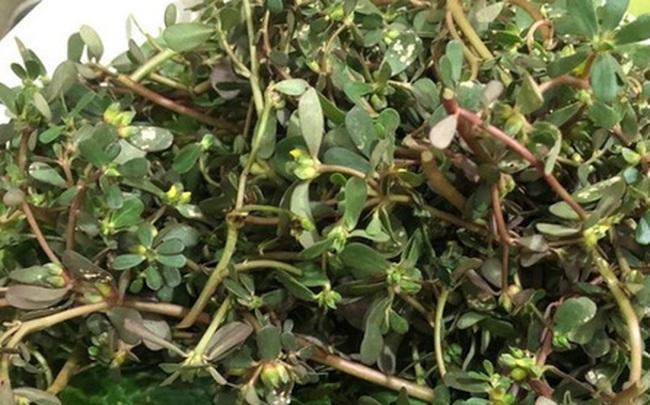 Rau dại đắt gấp 2-3 lần rau sạch vẫn được dân Hà thành tranh nhau mua
