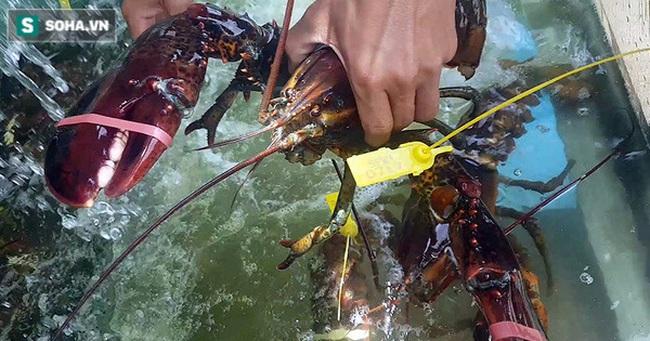 """Chen chân mua hải sản giảm """"sốc"""" 50%, tôm hùm 640.000 đồng/kg, ghẹ xanh 500.000 đồng/kg"""
