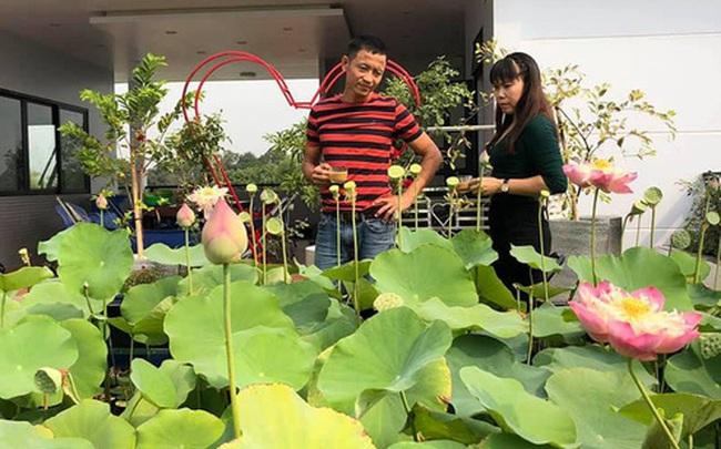 Đầm sen trên sân thượng 300m2 giữa lòng Sài Gòn: Ông chủ tự tay làm từ A-Z, chi phí chỉ 50 triệu