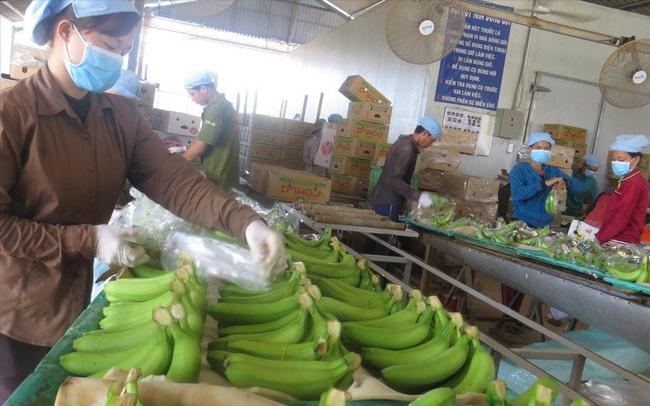 Xuất khẩu nông thủy sản hậu dịch COVID-19: Tìm cơ trong nguy