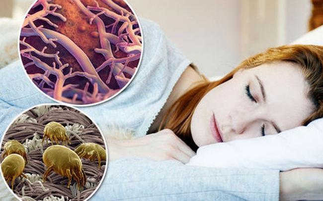 1 kg da chết, hàng trăm nghìn ve bụi: Hiểm họa không ngờ ẩn náu trên giường ngủ và cách tiêu diệt