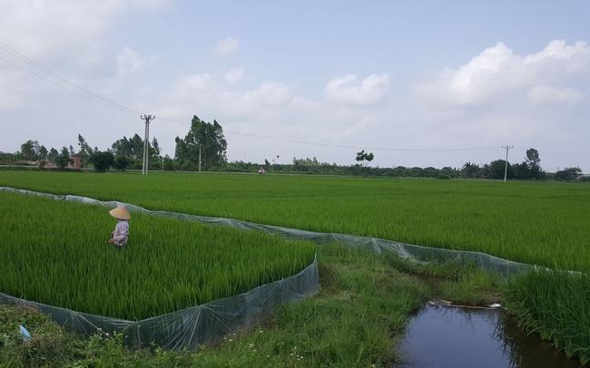 Tp.HCM thí điểm cho xây dựng tạm trên đất nông nghiệp ở các huyện ngoại thành
