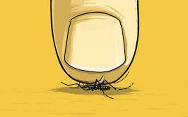 """Quy luật của loài muỗi: Tại sao phải tránh xa kiểu một người """"chỉ như muỗi vo ve"""" nhưng cực kỳ độc hại?"""