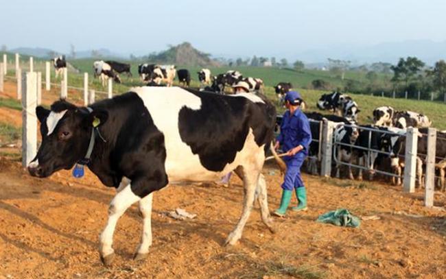 Sữa Mộc Châu: Quý 3 LNST tăng 113% lên 102 tỷ đồng, biên lãi gộp tiếp tục cải thiện