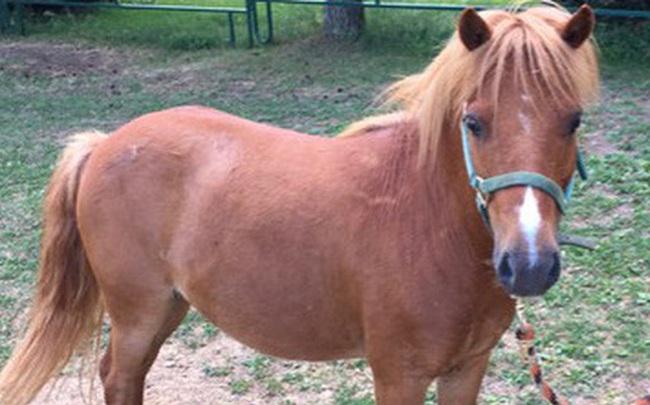 Thấy con ngựa nhỏ đi theo mình, người đàn ông dắt về đem bán, giấc mơ đêm hôm sau khiến anh ta kinh ngạc mãi không thôi