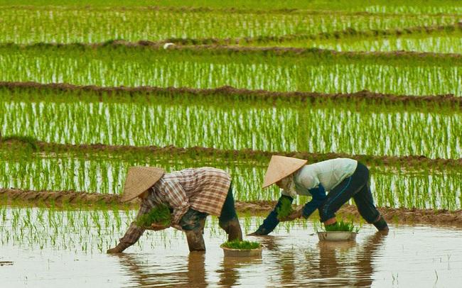 Vinafood 2 – khi anh cả của ngành lúa gạo tiếp tục ốm yếu
