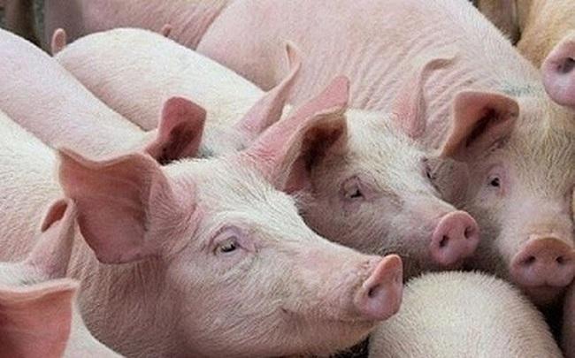 Sản lượng lợn của Trung Quốc tăng mạnh kéo giá thịt lợn giảm lần đầu tiên trong gần 2 năm