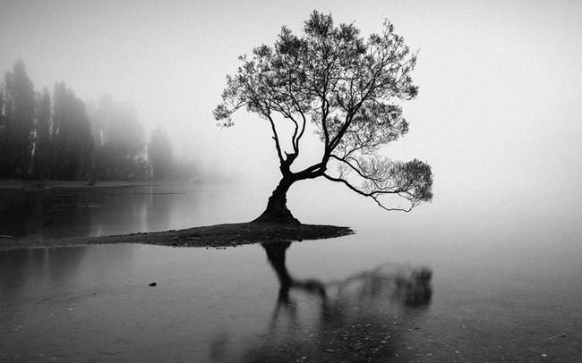 Đạo lý đời người như một cái cây: Đầu đội trời, chân đạp đất, tâm tĩnh như nước!