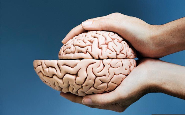 WebMD cảnh báo: Khối lượng mỡ bụng tỷ lệ nghịch với não bộ của con người