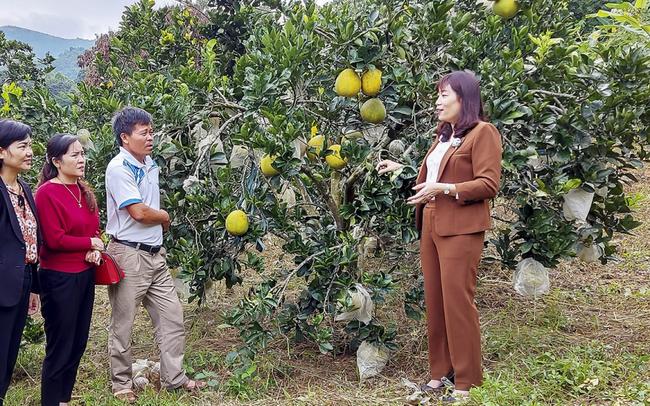 Học nhau cách làm giàu, nông dân có thu nhập hàng trăm triệu đồng