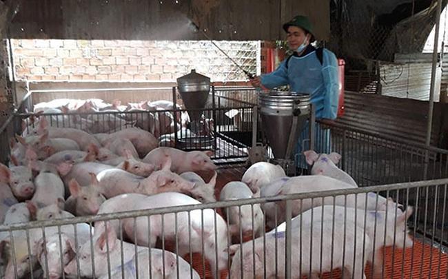 Dịch tả lợn châu Phi diễn biến phức tạp tạiĐắk Lắk