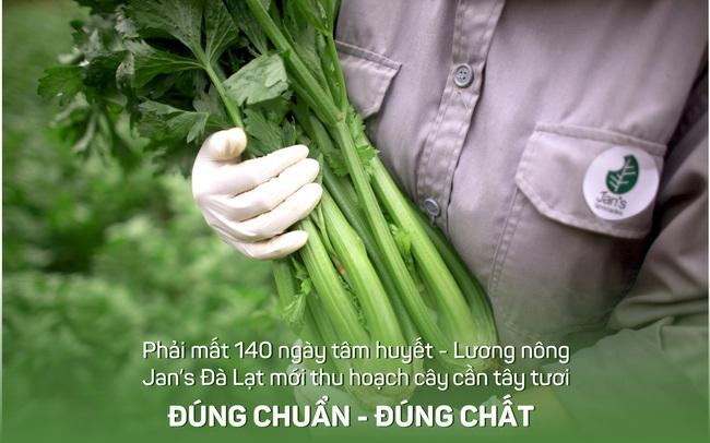 Bột cần tây Jan's - Sản phẩm của tình yêu nông nghiệp Việt