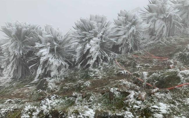 Đợt rét đậm, rét hại ở miền Bắc kéo dài đến khoảng 20/12