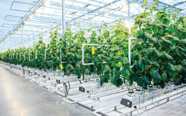 """9 """"nỗi khổ"""" của nông nghiệp công nghệ cao"""