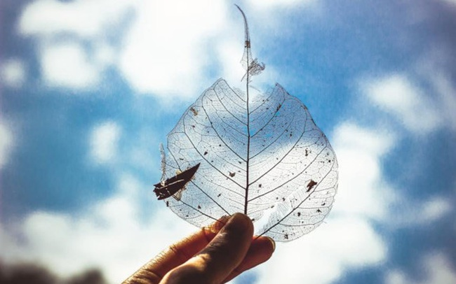 """5 giai đoạn của nỗi buồn: Hiểu rõ cảm xúc khi trải qua mất mát giúp chúng ta chữa lành """"vết thương lòng"""", tránh xa nguy cơ trầm cảm"""