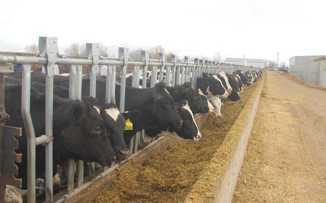 Vinamilk rót thêm 1.000 tỷ đầu tư vào trang trại bò sữa hữu cơ tại Lào