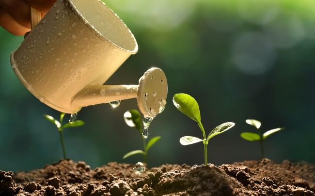 Cùng được trồng nhưng khi gặp mưa bão, cây chăm sóc nhiều hơn lại bị đổ, hỏi ra mới biết: Vạn sự trên đời muốn đứng vững phải dựa vào nỗ lực của chính mình!
