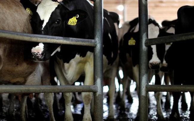 Úc không cho công ty Trung Quốc mua lại các nhãn hiệu sữa nổi tiếng