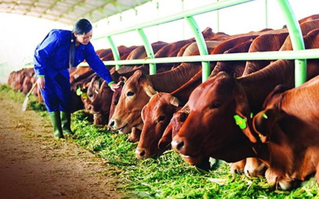Chăn nuôi Gia Lai: Vốn chủ âm 5.300 tỷ đồng, HAGL sẽ chuyển đổi 5.866 tỷ nợ vay, phải thu sang cổ phần