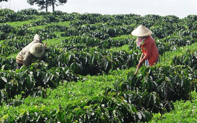 Việt Nam vượt Brazil trở thành nhà cung ứng cà phê hàng đầu vào Nhật Bản