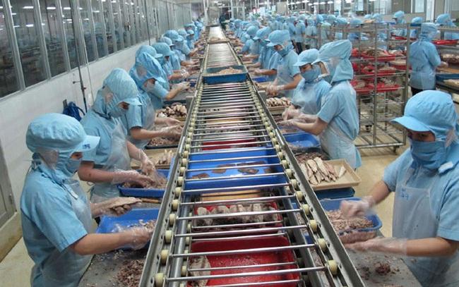 Xuất khẩu cá ngừ Việt Nam sang thị trường lớn bắt đầu khả quan