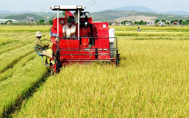 Lũ lụt lịch sử tại Trung Quốc, cổ phiếu nông nghiệp HNG, LTG bứt phá mạnh trong phiên 7/9